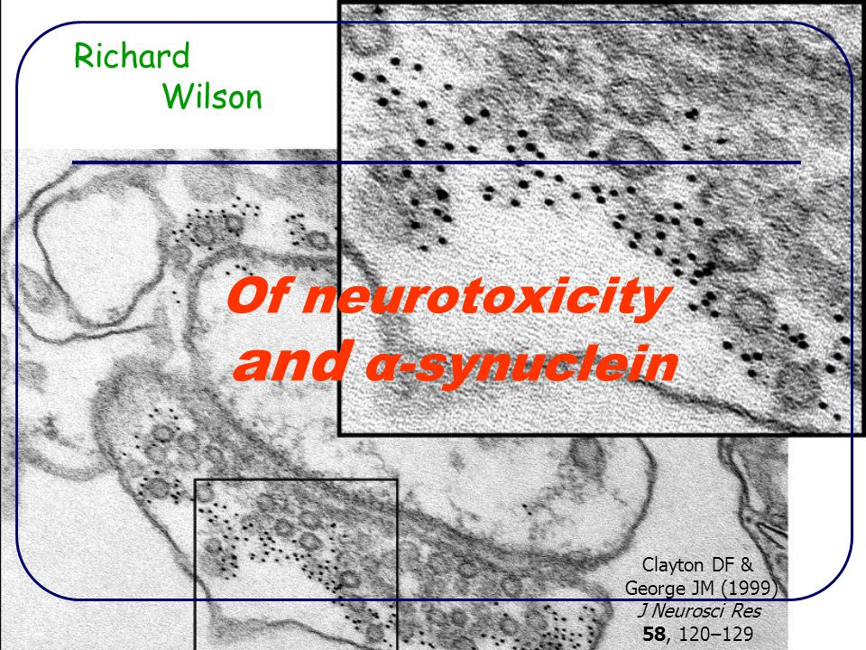 Of neurotoxicity and α-synuclein Richard Wilson Clayton DF & George JM (1999) J Neurosci Res 58, 120–129