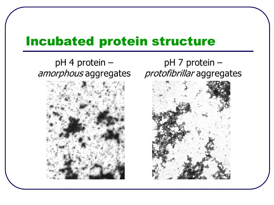 Incubated protein structure pH 4 protein – amorphous aggregates pH 7 protein – protofibrillar aggregates