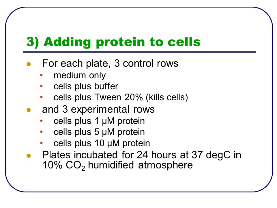3) Adding protein to cells For each plate, 3 control rows medium only cells plus buffer cells plus Tween 20% (kills cells) and 3 experimental rows cells plus 1 μM protein cells plus 5 μM protein cells plus 10 μM protein Plates incubated for 24 hours at 37 degC in 10% CO 2 humidified atmosphere