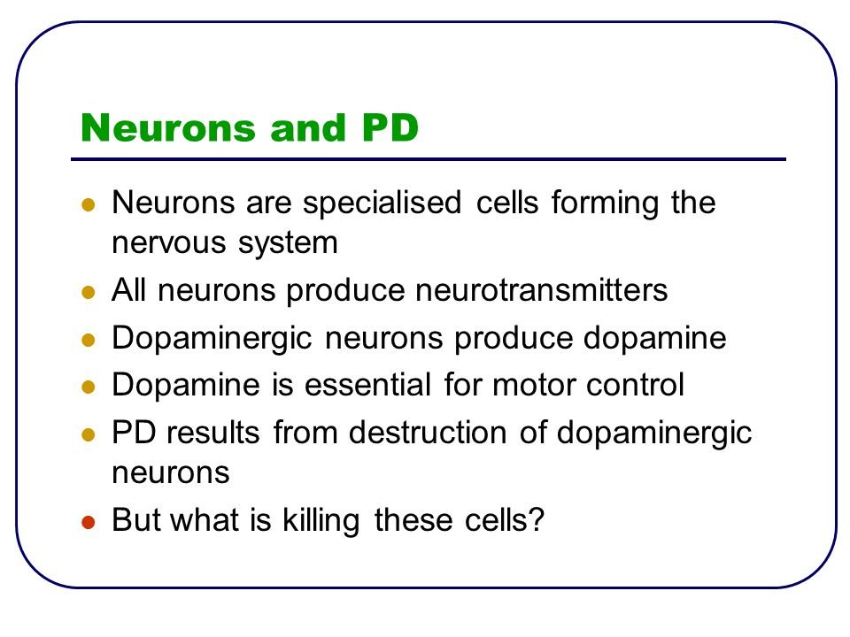 Neurons and PD Neurons are specialised cells forming the nervous system All neurons produce neurotransmitters Dopaminergic neurons produce dopamine Do