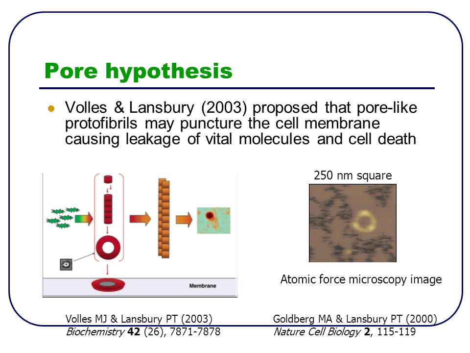 Pore hypothesis Volles & Lansbury (2003) proposed that pore-like protofibrils may puncture the cell membrane causing leakage of vital molecules and ce