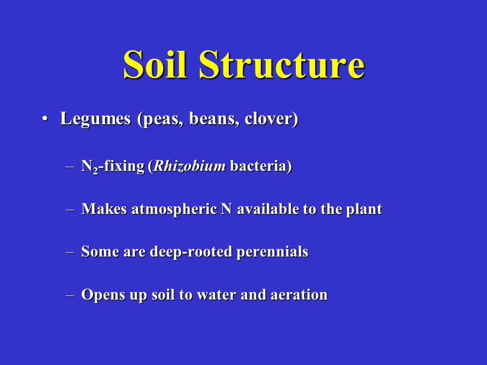 Soil Structure Legumes (peas, beans, clover)Legumes (peas, beans, clover) –N 2 -fixing (Rhizobium bacteria) –Makes atmospheric N available to the plant –Some are deep-rooted perennials –Opens up soil to water and aeration