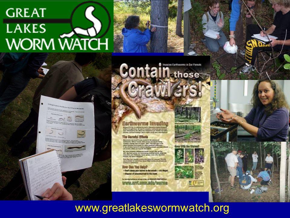 www.greatlakeswormwatch.org
