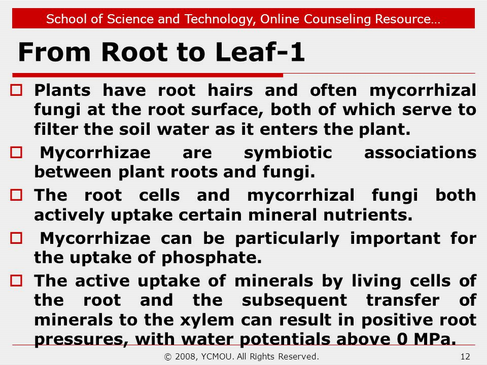 School of Science and Technology, Online Counseling Resource… From Root to Leaf-1  Plants have root hairs and often mycorrhizal fungi at the root sur