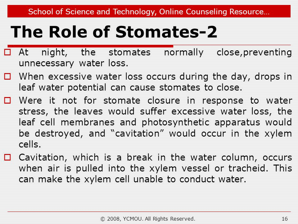 School of Science and Technology, Online Counseling Resource… The Role of Stomates-2  At night, the stomates normally close,preventing unnecessary wa