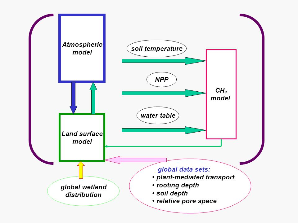 Atmospheric model Land surface model soil temperature NPP water table CH 4 model global wetland distribution global data sets: plant-mediated transport rooting depth soil depth relative pore space