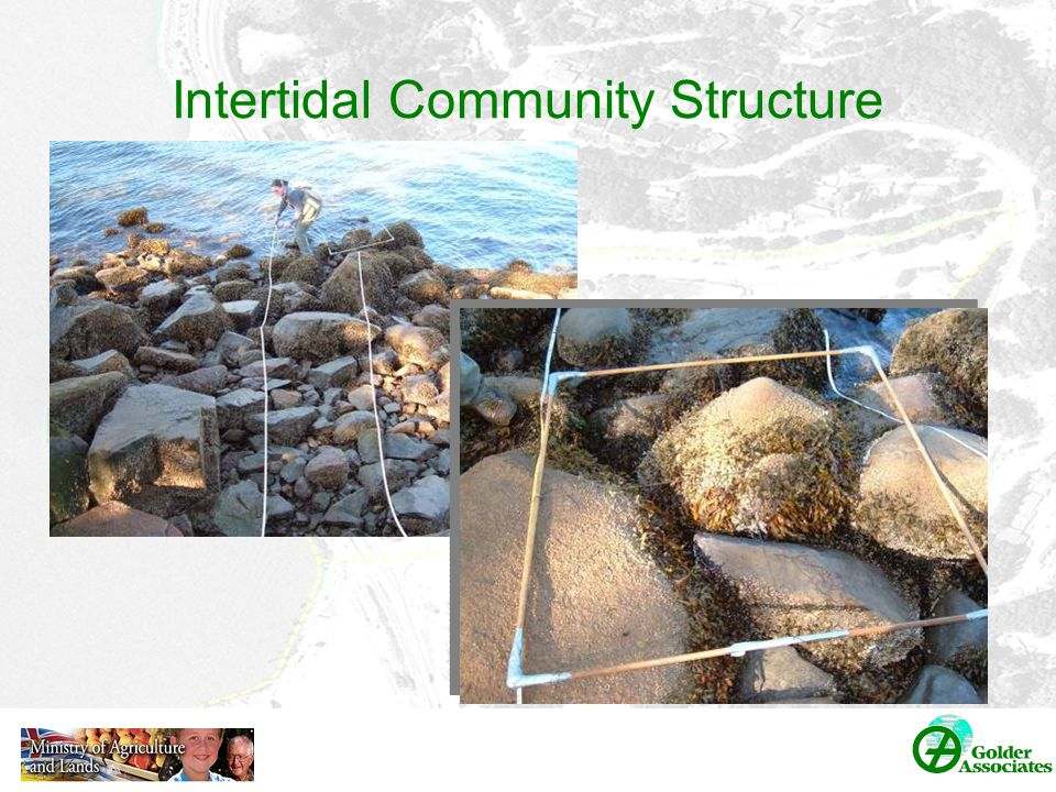 Intertidal Community Structure
