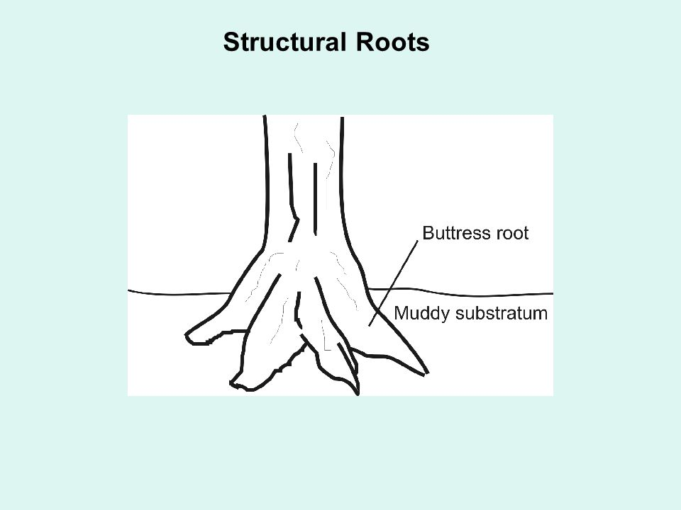 Structural Roots