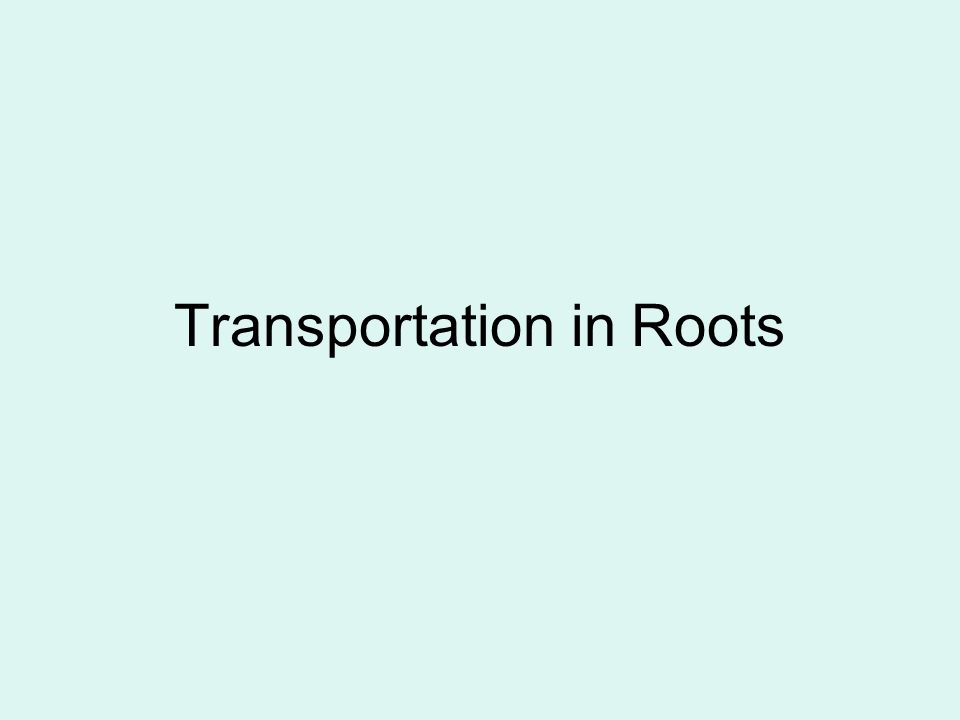 Transportation in Roots