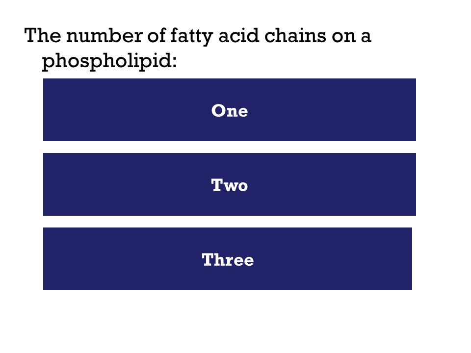 The number of fatty acid chains on a phospholipid: Two One Three