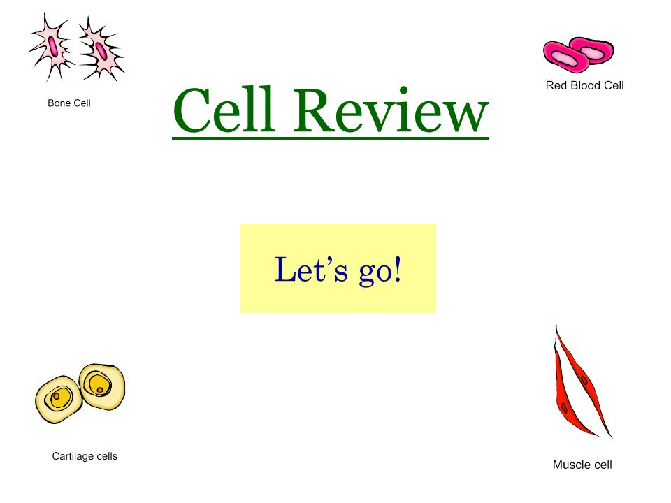 Cell Review Let's go!