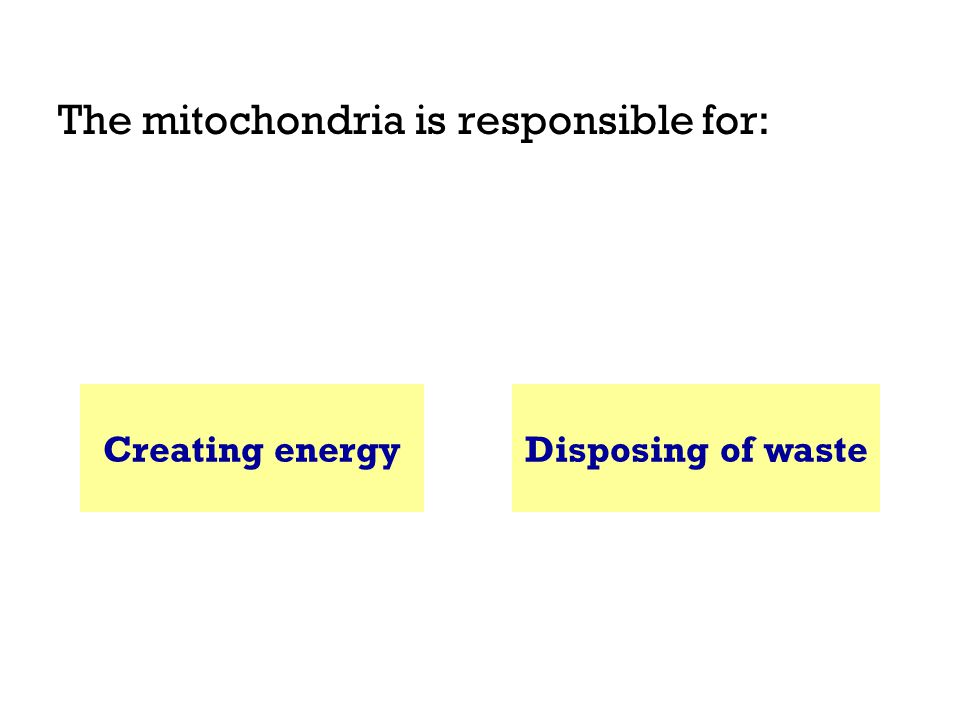 The mitochondria is responsible for: Creating energyDisposing of waste