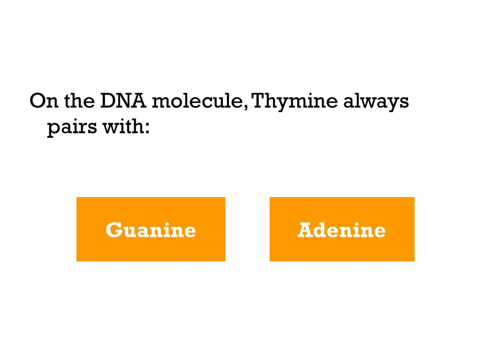 On the DNA molecule, Thymine always pairs with: AdenineGuanine