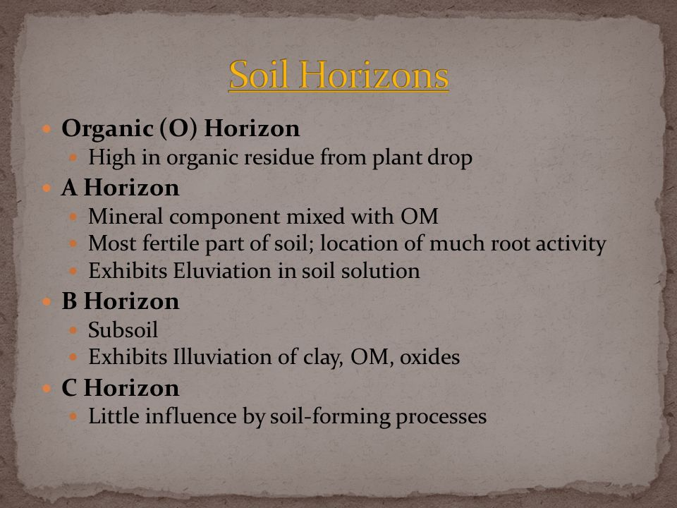 Organic (O) Horizon High in organic residue from plant drop A Horizon Mineral component mixed with OM Most fertile part of soil; location of much root activity Exhibits Eluviation in soil solution B Horizon Subsoil Exhibits Illuviation of clay, OM, oxides C Horizon Little influence by soil-forming processes