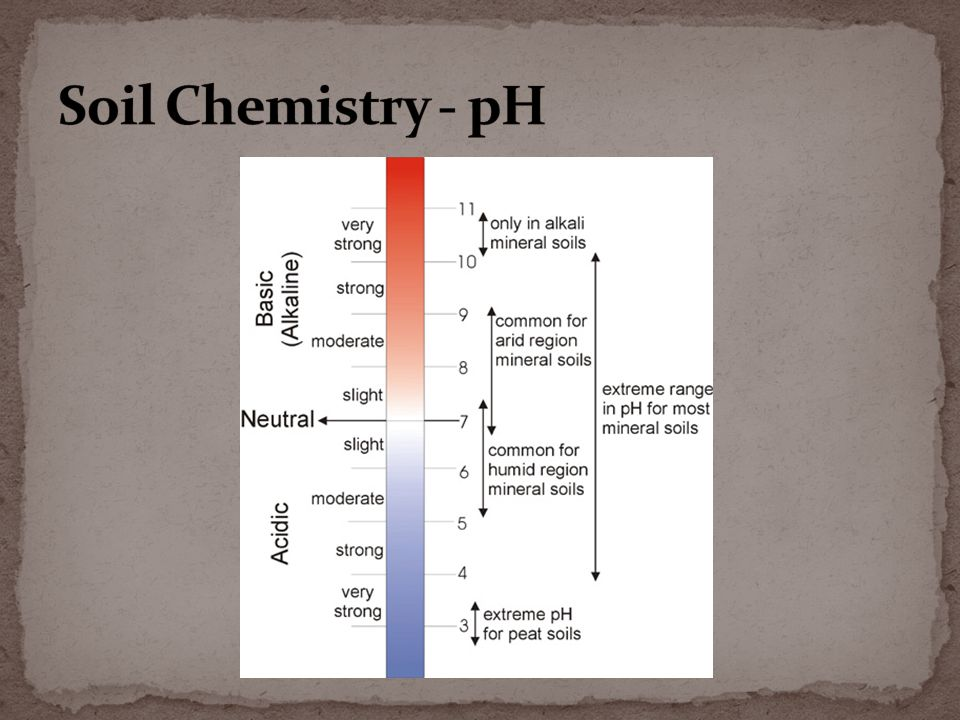 Role of Al 3+ in soil acidity Al 3+ + H2O  AlOH 2+ + H + AlOH 2+ becomes site for P adsorption