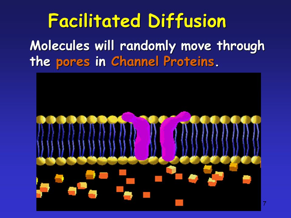 7 Facilitated Diffusion Molecules will randomly move through the pores in Channel Proteins.