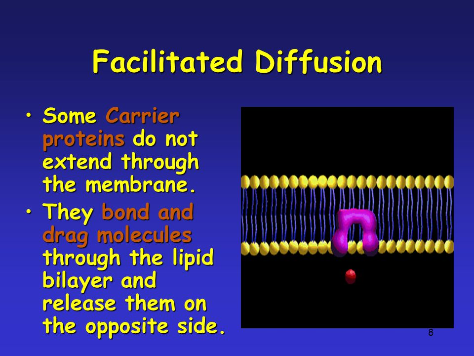 8 Facilitated Diffusion Some Carrier proteins do not extend through the membrane.Some Carrier proteins do not extend through the membrane.