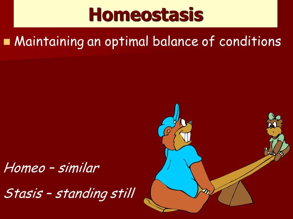 Homeostasis Maintaining an optimal balance of conditions Homeo – similar Stasis – standing still
