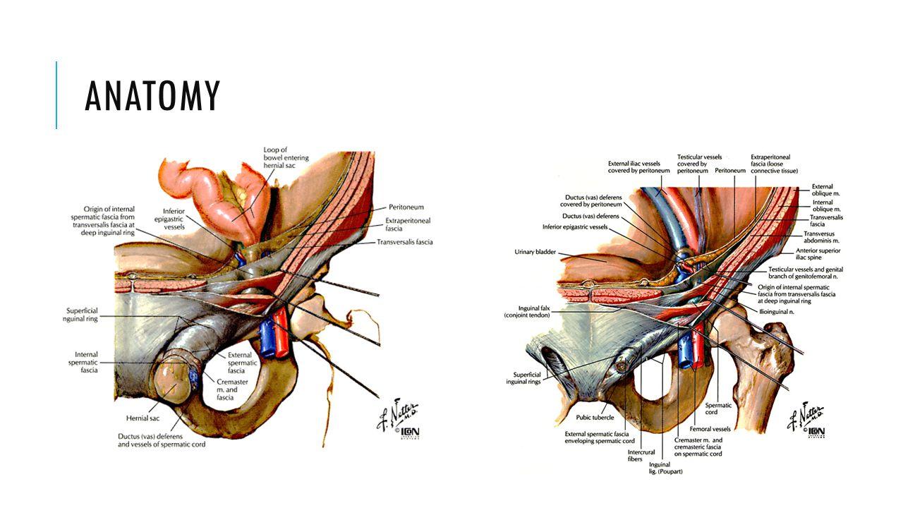 TEP Master Techniques in Surgery: Hernia. Jones B Daniel. 2012.