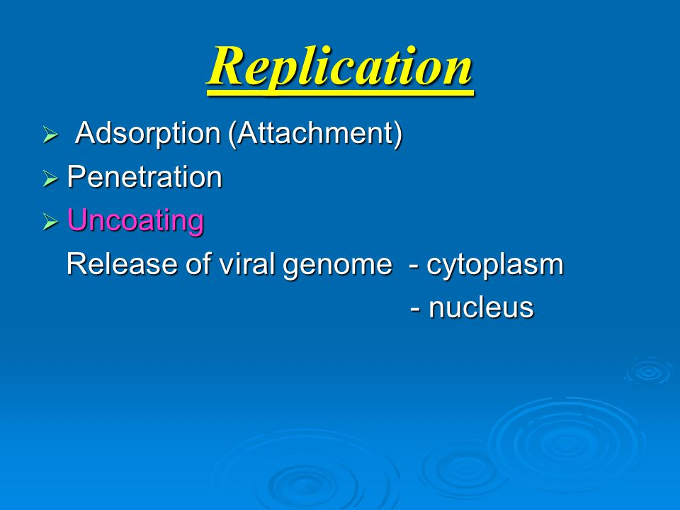 Replication  Adsorption (Attachment)  Penetration  Uncoating Release of viral genome - cytoplasm Release of viral genome - cytoplasm - nucleus - nucleus