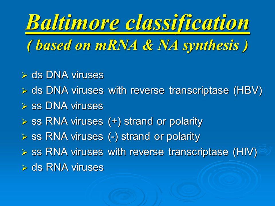 Baltimore classification ( based on mRNA & NA synthesis )  ds DNA viruses  ds DNA viruses with reverse transcriptase (HBV)  ss DNA viruses  ss RNA viruses (+) strand or polarity  ss RNA viruses (-) strand or polarity  ss RNA viruses with reverse transcriptase (HIV)  ds RNA viruses