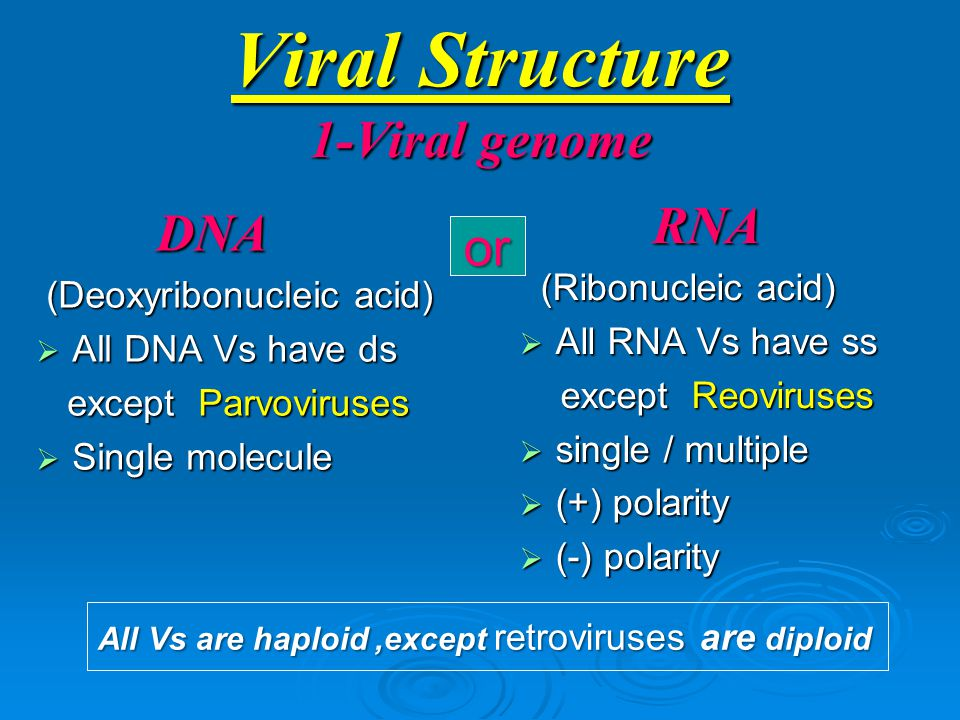 Viral Structure 1-Viral genome RNA RNA (Ribonucleic acid) (Ribonucleic acid)  All RNA Vs have ss except Reoviruses except Reoviruses  single / multiple  (+) polarity  (-) polarity DNA DNA (Deoxyribonucleic acid) (Deoxyribonucleic acid)  All DNA Vs have ds except Parvoviruses except Parvoviruses  Single molecule or All Vs are haploid,except retroviruses are diploid