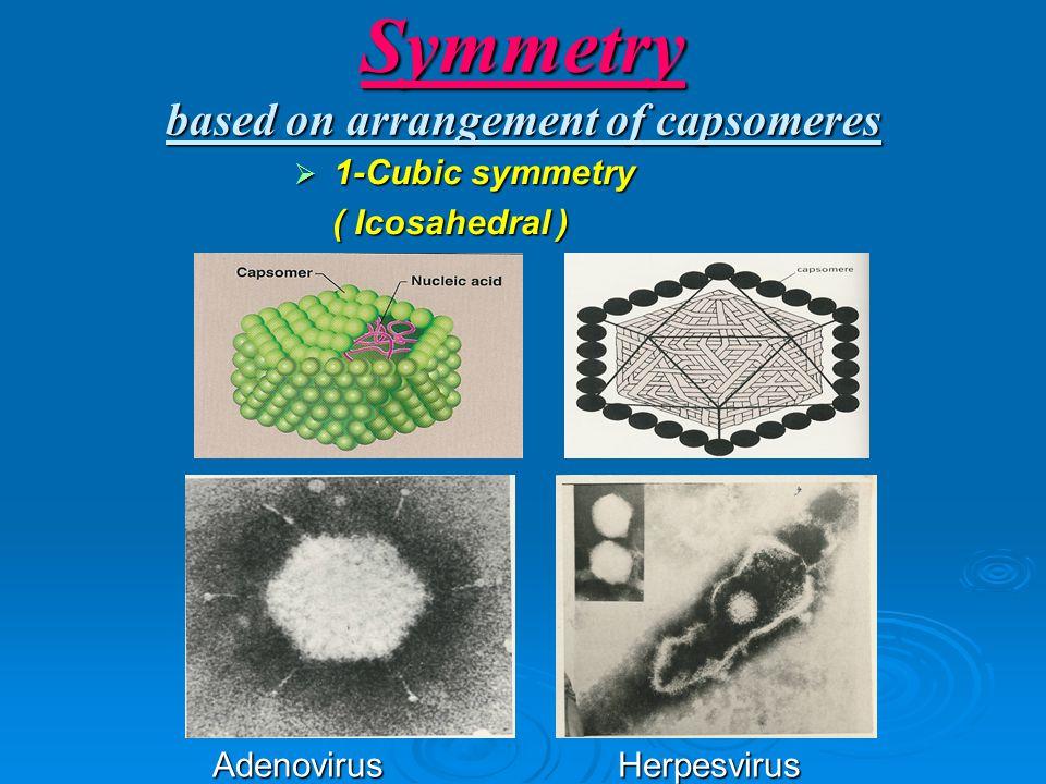 Symmetry based on arrangement of capsomeres  1-Cubic symmetry ( Icosahedral ) ( Icosahedral ) Adenovirus Herpesvirus