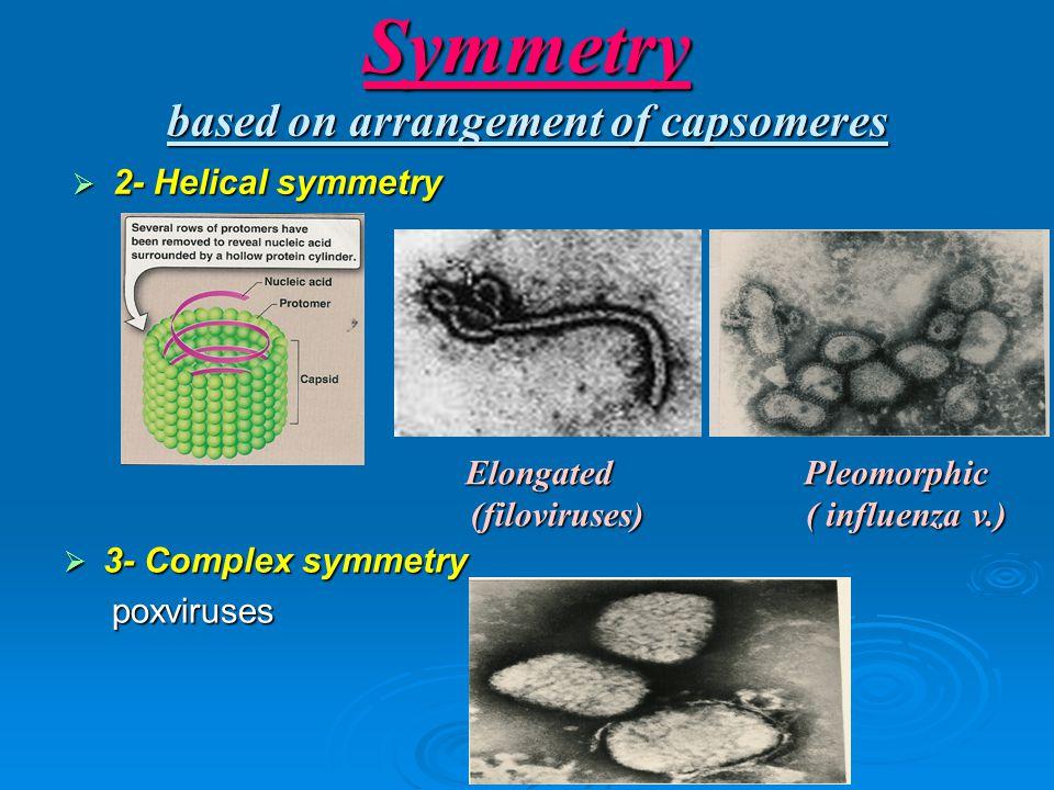 Symmetry based on arrangement of capsomeres  2- Helical symmetry  3- Complex symmetry poxviruses poxviruses Elongated (filoviruses) (filoviruses)Pleomorphic ( influenza v.) ( influenza v.)
