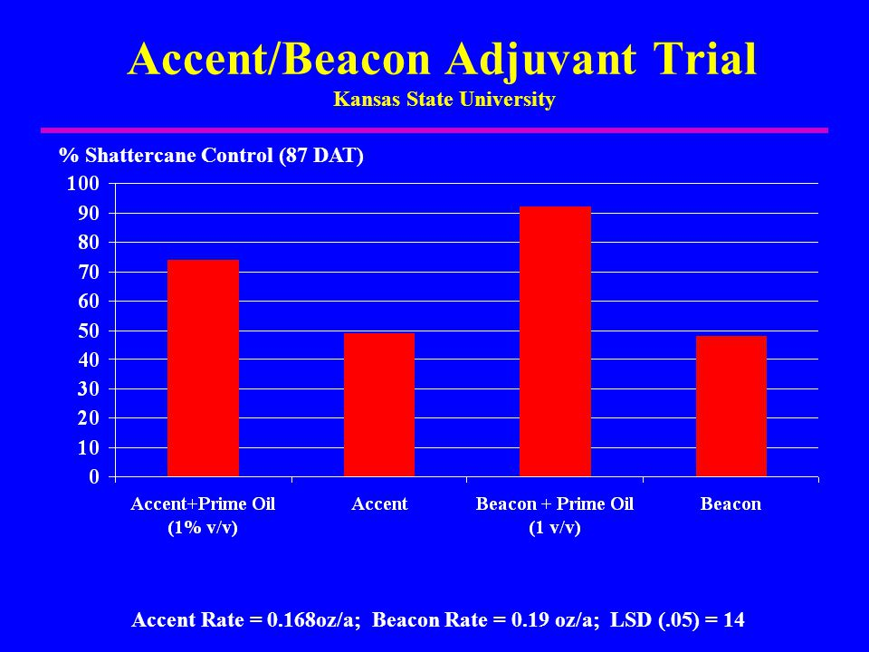 Accent/Beacon Adjuvant Trial Kansas State University % Shattercane Control (87 DAT) Accent Rate = 0.168oz/a; Beacon Rate = 0.19 oz/a; LSD (.05) = 14