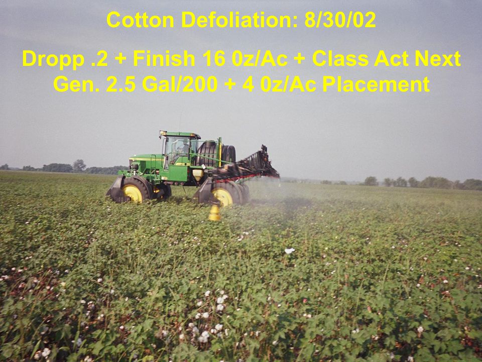 Cotton Defoliation: 8/30/02 Dropp.2 + Finish 16 0z/Ac + Class Act Next Gen.