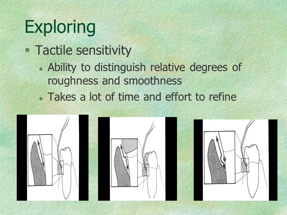 Exploring §Tactile sensitivity l Ability to distinguish relative degrees of roughness and smoothness l Takes a lot of time and effort to refine