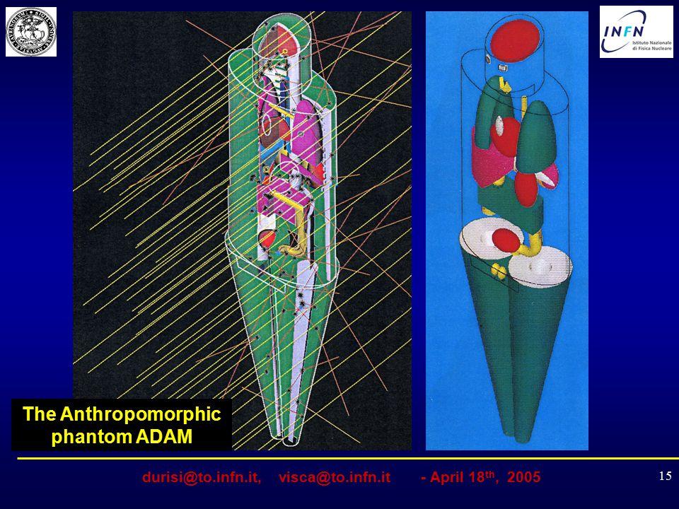 durisi@to.infn.it, visca@to.infn.it - April 18 th, 2005 15 The Anthropomorphic phantom ADAM