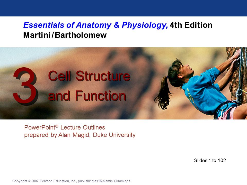 Essentials of Anatomy & Physiology, 4th Edition Martini / Bartholomew PowerPoint ® Lecture Outlines prepared by Alan Magid, Duke University Cell Structure and Function Cell Structure and Function 3 3 Copyright © 2007 Pearson Education, Inc., publishing as Benjamin Cummings Slides 1 to 102