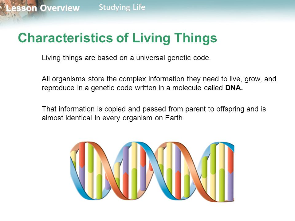 Lesson Overview Lesson Overview Studying Life Characteristics of Living Things Living things are based on a universal genetic code. All organisms stor