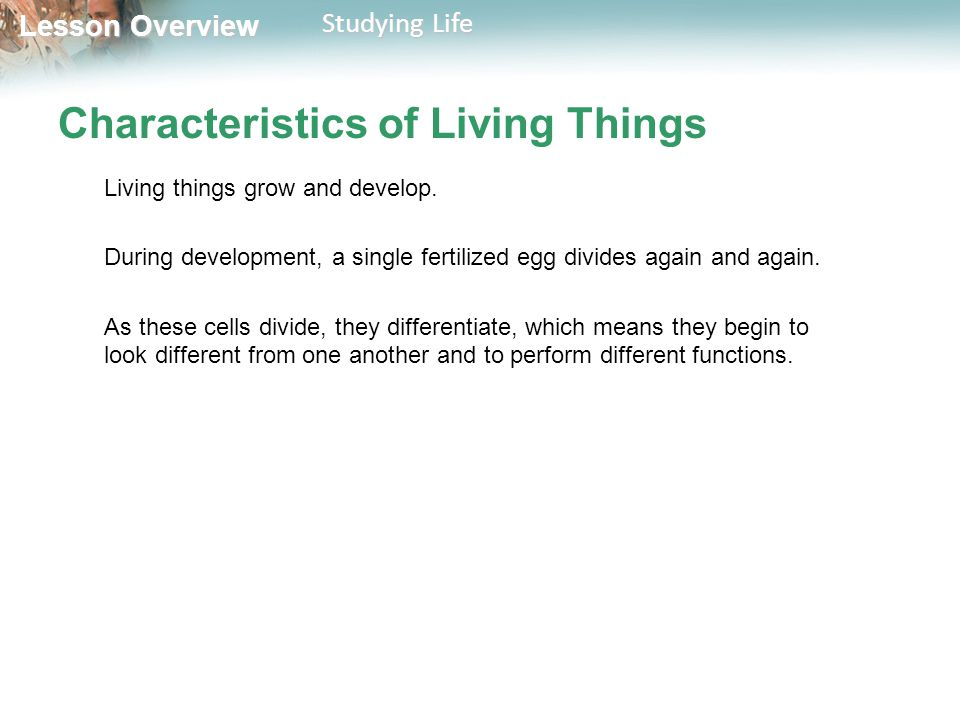 Lesson Overview Lesson Overview Studying Life Characteristics of Living Things Living things respond to their environment.