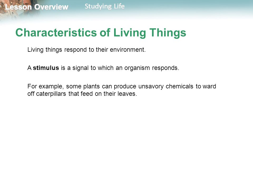 Lesson Overview Lesson Overview Studying Life Characteristics of Living Things Living things respond to their environment. A stimulus is a signal to w