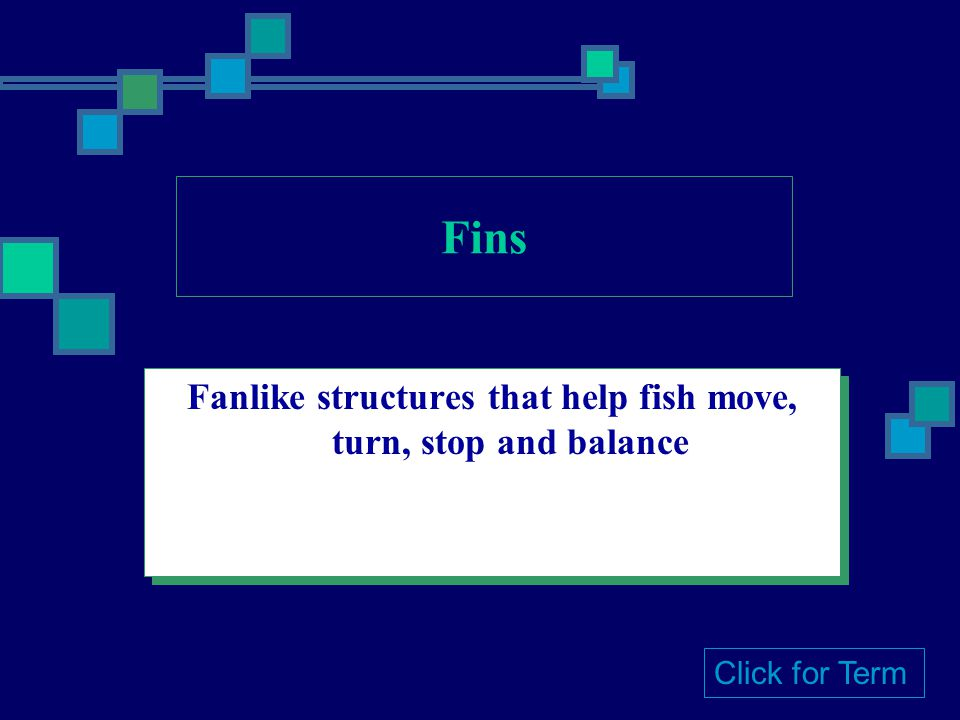 Fanlike structures that help fish move, turn, stop and balance Click for Term