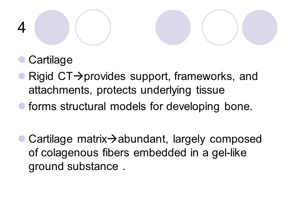 4 Cartilage Rigid CT  provides support, frameworks, and attachments, protects underlying tissue forms structural models for developing bone.