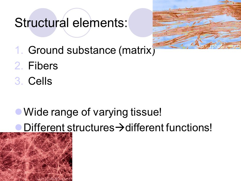 Ground Substance (matrix) Unstructured material Fills spaces/contains fibers Composed of: 1.interstitial fluid 2.cell adhesion proteins  glue like function 3.Proteoglycans  protein core (point of attachment) GAGs glycosaminoglycans 1.(interlock trapping water)