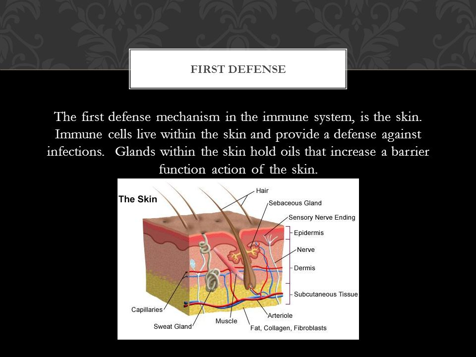 The first defense mechanism in the immune system, is the skin.