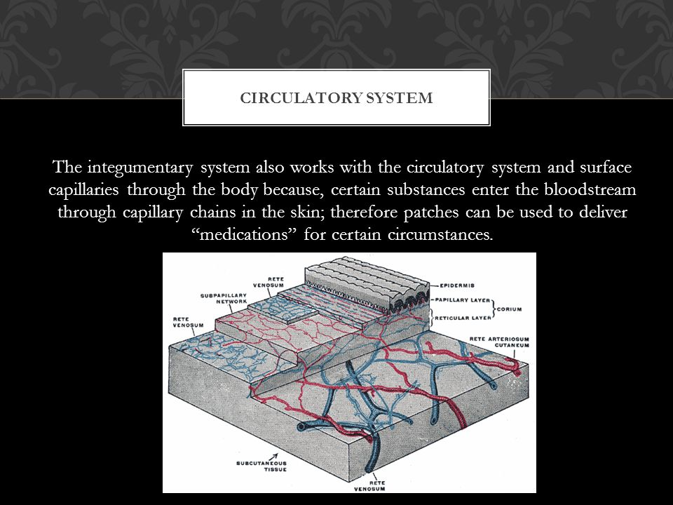 The integumentary system also works with the circulatory system and surface capillaries through the body because, certain substances enter the bloodstream through capillary chains in the skin; therefore patches can be used to deliver medications for certain circumstances.