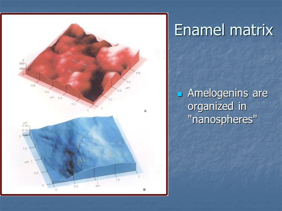 Enamel matrix Amelogenins are organized in nanospheres Amelogenins are organized in nanospheres