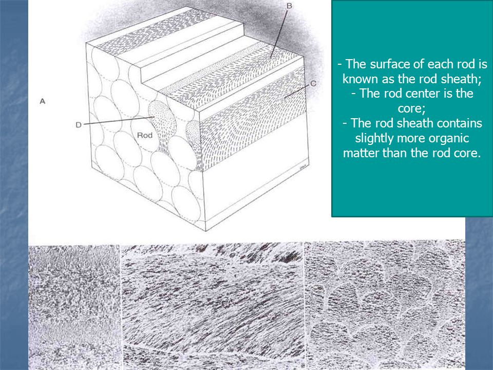 - The surface of each rod is known as the rod sheath; - The rod center is the core; - The rod sheath contains slightly more organic matter than the rod core.