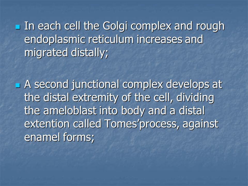 In each cell the Golgi complex and rough endoplasmic reticulum increases and migrated distally; In each cell the Golgi complex and rough endoplasmic reticulum increases and migrated distally; A second junctional complex develops at the distal extremity of the cell, dividing the ameloblast into body and a distal extention called Tomes'process, against enamel forms; A second junctional complex develops at the distal extremity of the cell, dividing the ameloblast into body and a distal extention called Tomes'process, against enamel forms;