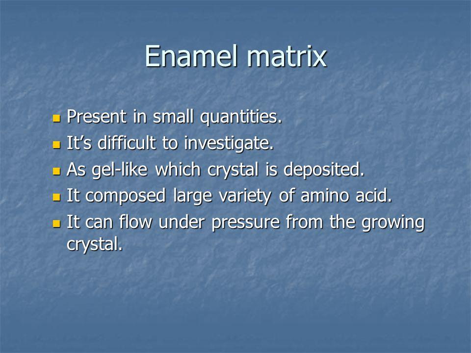 Enamel matrix Present in small quantities. Present in small quantities. It's difficult to investigate. It's difficult to investigate. As gel-like whic