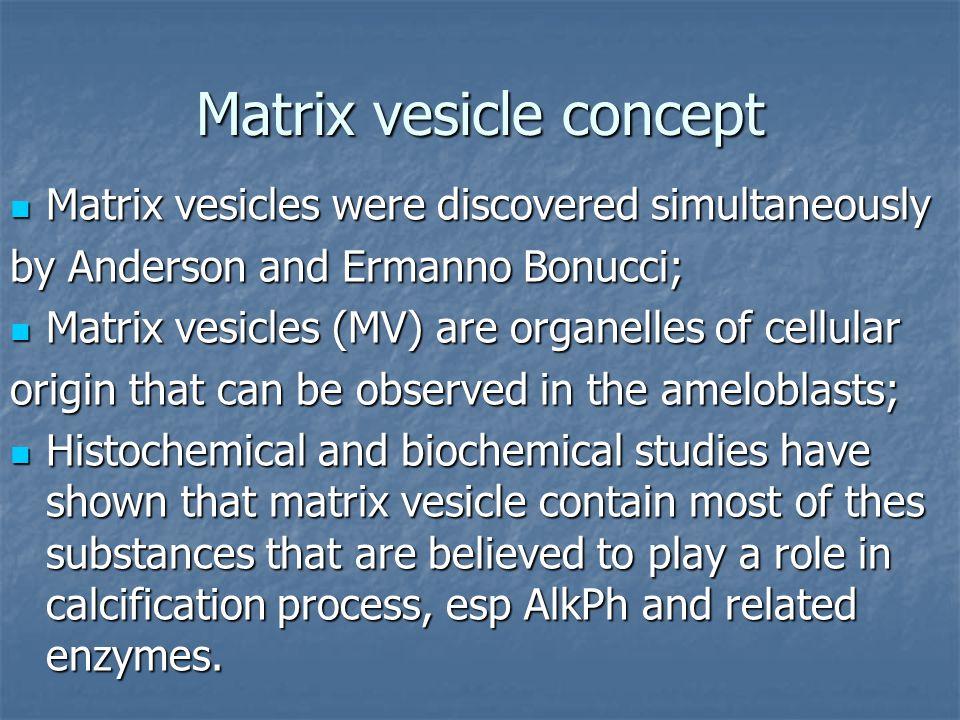 Matrix vesicle concept Matrix vesicles were discovered simultaneously Matrix vesicles were discovered simultaneously by Anderson and Ermanno Bonucci;