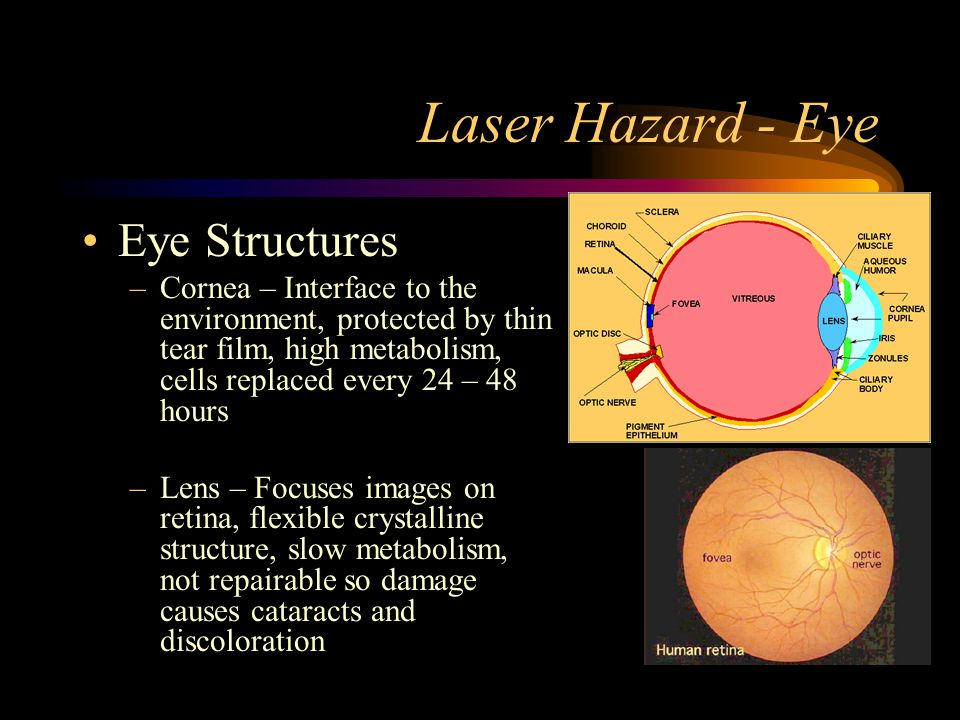 Laser Hazard - Eye Eye Structures –Cornea – Interface to the environment, protected by thin tear film, high metabolism, cells replaced every 24 – 48 h