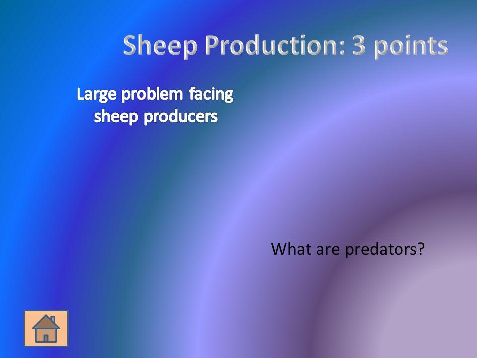 What are predators?