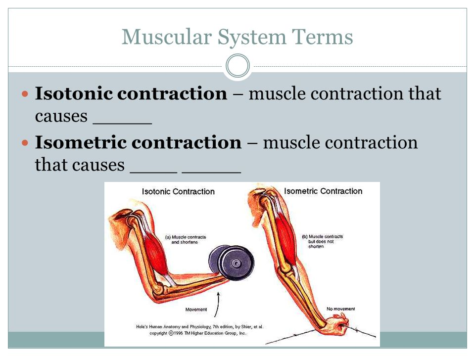 Muscular System Terms Isotonic contraction – muscle contraction that causes _____ Isometric contraction – muscle contraction that causes ____ _____