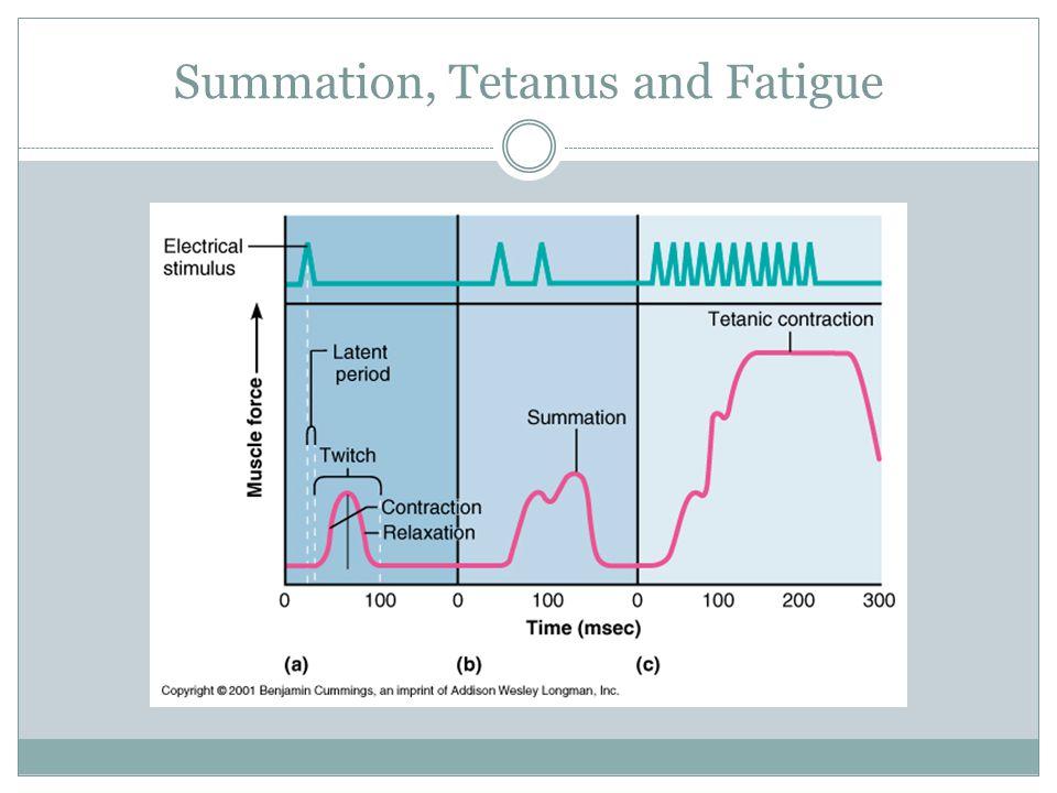 Summation, Tetanus and Fatigue